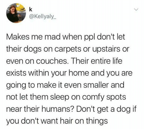 carpets: @Kellyaly  Makes me mad when ppl don't let  their dogs on carpets or upstairs or  even on couches. Their entire life  exists within your home and you are  going to make it even smaller and  not let them sleep on comfy spots  near their humans? Don't get a dog if  you don't want hair on things