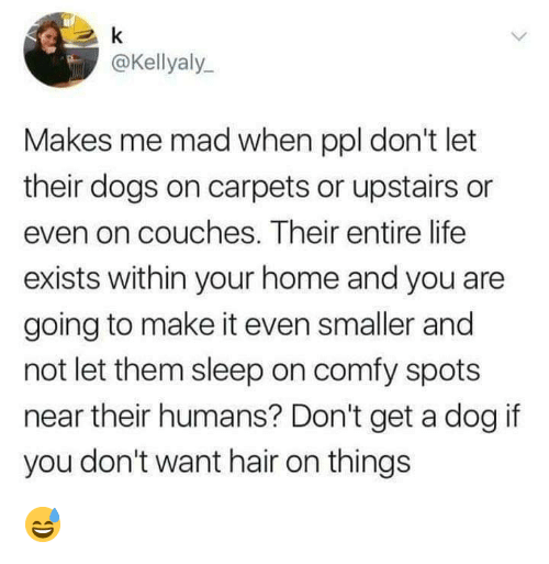 carpets: @Kellyaly  Makes me mad when ppl don't let  their dogs on carpets or upstairs or  even on couches. Their entire life  exists within your home and you are  going to make it even smaller and  not let them sleep on comfy spots  near their humans? Don't get a dog if  you don't want hair on things 😅
