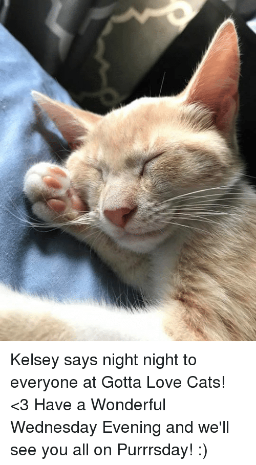 Have A Wonderful Wednesday: Kelsey says night night to everyone at Gotta Love Cats! <3 Have a Wonderful Wednesday Evening and we'll see you all on Purrrsday! :)