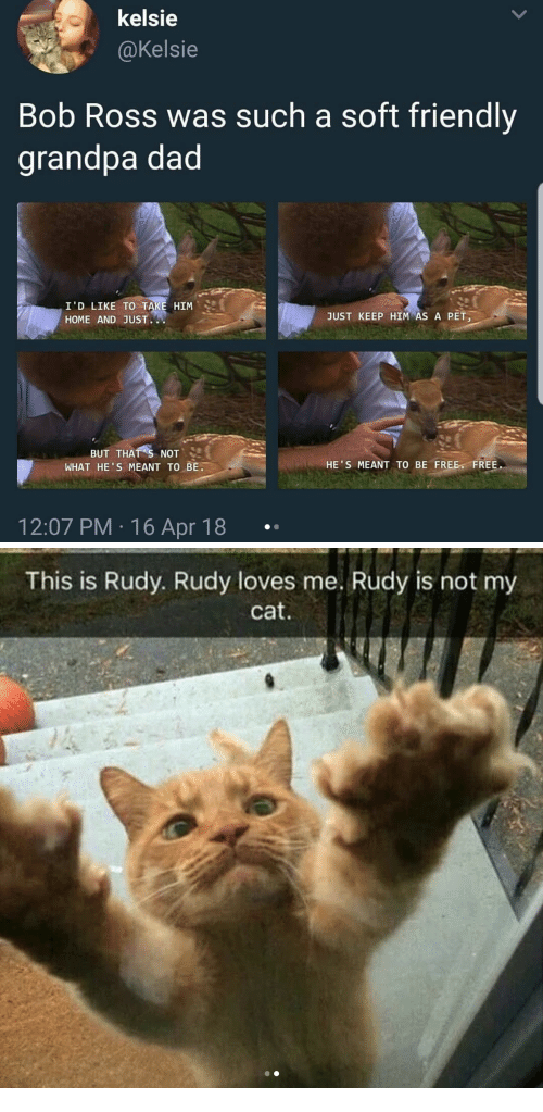 Dad, Grandpa, and Bob Ross: kelsie  @Kelsie  Bob Ross was such a soft friendly  grandpa dad  I'D LIKE TO TAKE HIM  HOME AND JUST.  JUST KEEP HIM AS A PET,  BUT THAT s NOT  WHAT HE'S MEANT TO BE.  HE'S MEANT TO BE FREE FREE.  12:07 PM 16 Apr 18   This is Rudy. Rudy loves me. Rudy is not my  cat
