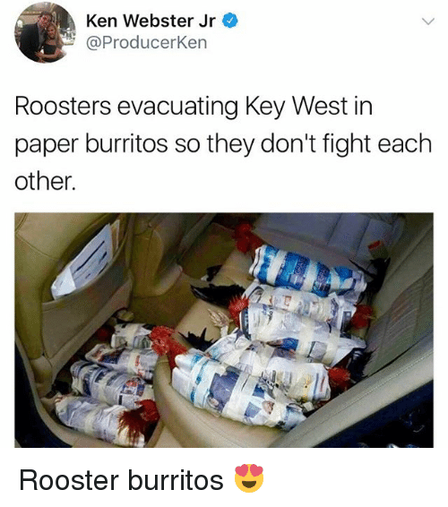 kenning: Ken Webster Jr  @Producerken  Roosters evacuating Key West in  paper burritos so they don't fight each  other Rooster burritos 😍