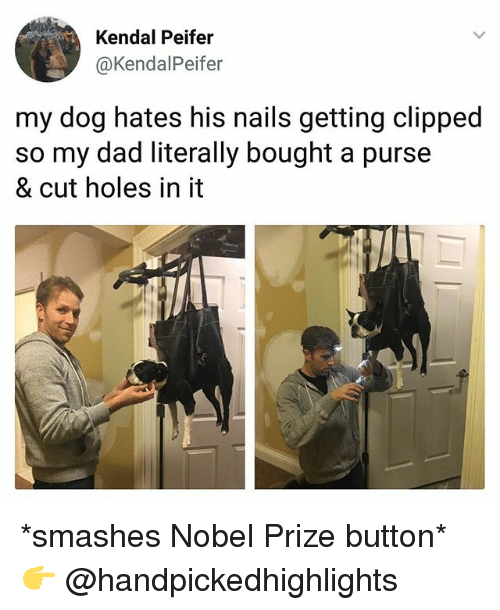 Dad, Memes, and Nobel Prize: Kendal Peifer  @KendalPeifer  my dog hates his nails getting clipped  so my dad literally bought a purse  & cut holes in it *smashes Nobel Prize button* 👉 @handpickedhighlights