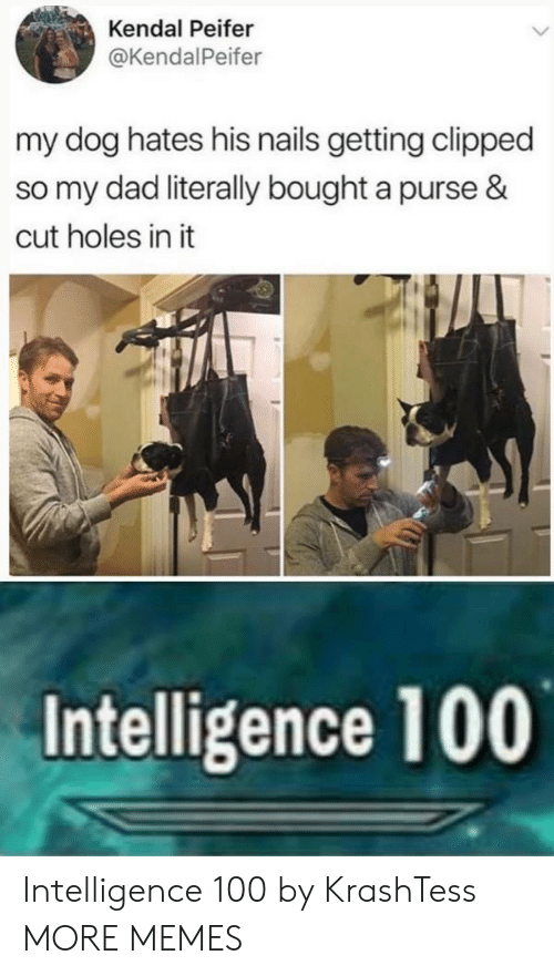 kendal: Kendal Peifer  @KendalPeifer  my dog hates his nails getting clipped  so my dad literally bought a purse &  cut holes in it  Intelligence 100 Intelligence 100 by KrashTess MORE MEMES