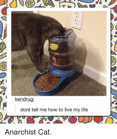 Dont Tell Me How To Live My Life: kendrug:  dont tell me how to live my life <p>Anarchist Cat.</p>