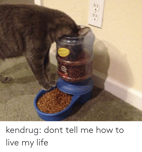 Dont Tell Me How To Live My Life: kendrug:  dont tell me how to live my life