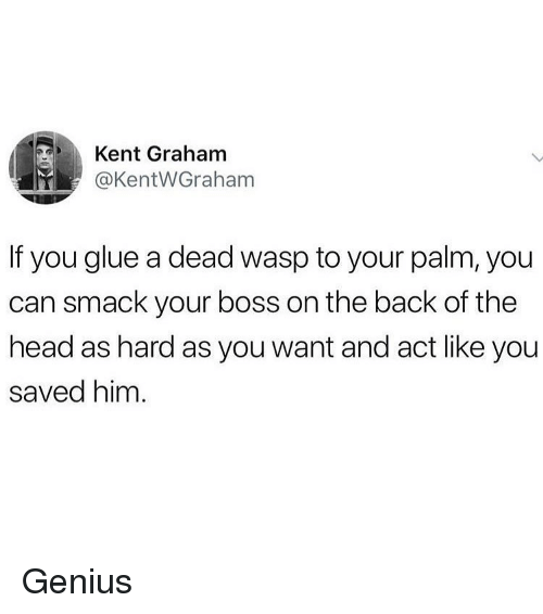 Head, Memes, and Genius: Kent Graham  @KentWGraham  If you glue a dead wasp to your palm, you  can smack your boss on the back of the  head as hard as you want and act like you  saved him Genius