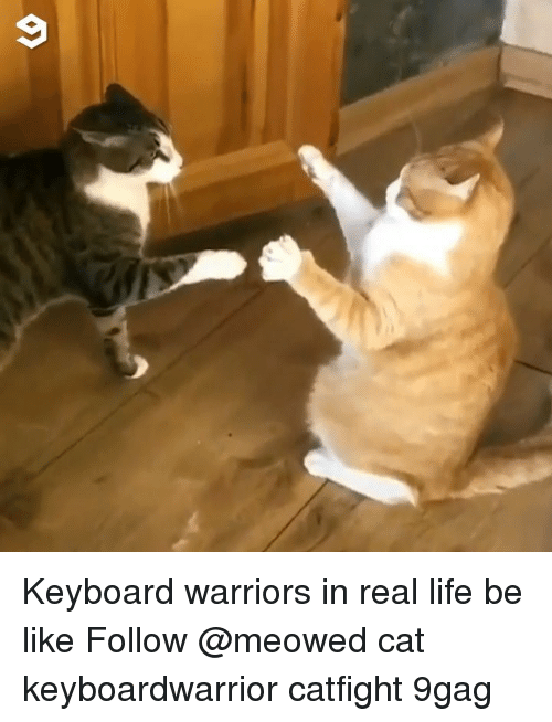 Life Be Like: Keyboard warriors in real life be like Follow @meowed cat keyboardwarrior catfight 9gag