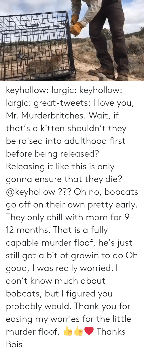 bobcats: keyhollow:  largic:  keyhollow: largic:   great-tweets:  I love you, Mr. Murderbritches.  Wait, if that's a kitten shouldn't they be raised into adulthood first before being released? Releasing it like this is only gonna ensure that they die? @keyhollow ???   Oh no, bobcats go off on their own pretty early. They only chill with mom for 9-12 months. That is a fully capable murder floof, he's just still got a bit of growin to do  Oh good, I was really worried. I don't know much about bobcats, but I figured you probably would. Thank you for easing my worries for the little murder floof.  👍👍❤️  Thanks Bois