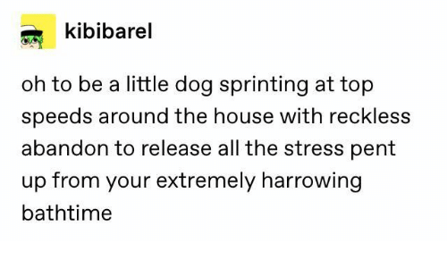 reckless: kibibarel  oh to be a little dog sprinting at top  speeds around the house with reckless  abandon to release all the stress pent  up from your extremely harrowing  bathtime