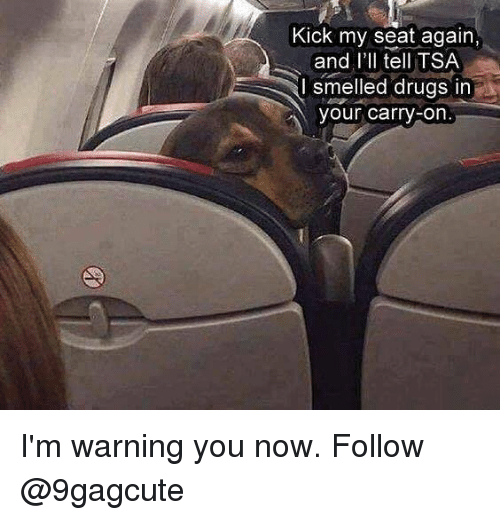 Drugs, Memes, and 🤖: Kick my seat again,  and l'Il tell TSA  I smelled drugs in  our carry-on I'm warning you now. Follow @9gagcute
