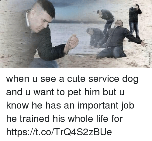 Cute, Dogs, and Funny: kietka net when u see a cute service dog and u want to pet him but u know he has an important job he trained his whole life for https://t.co/TrQ4S2zBUe