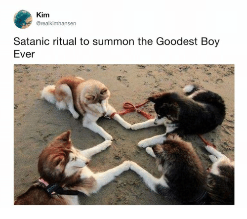 Summone: Kim  @realkimhansen  Satanic ritual to summon the Goodest Boy  Ever