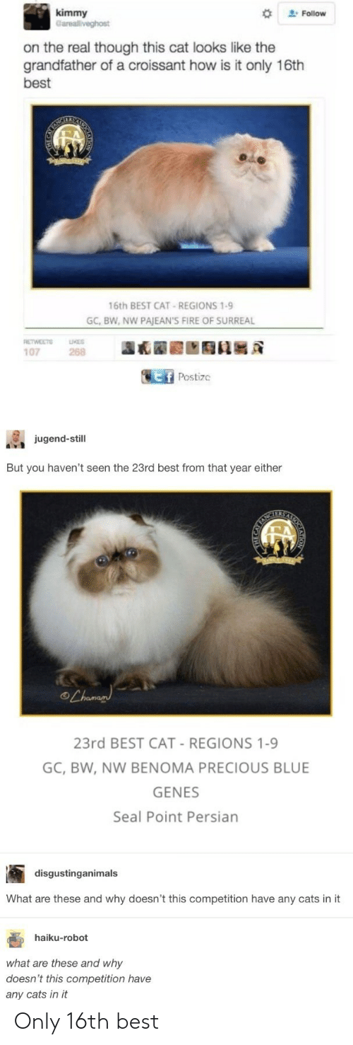 """Best Cat: kimmy  """" Follow  arealliveghost  on the real though this cat looks like the  grandfather of a croissant how is it only 16th  best  16th BEST CAT-REGIONS 1-9  GC, BW, NW PAJEAN'S FIRE OF SURREAL  RETWEE LUKES  107  268  Postizc  jugend-still  But you haven't seen the 23rd best from that year either  23rd BEST CAT-REGIONS 1-9  GC, BW, NW BENOMA PRECIOUS BLUE  GENES  Seal Point Persian  disgustinganimals  What are these and why doesn't this competition have any cats in it  haiku-robot  what are these and why  doesn't this competition have  any cats in it Only 16th best"""