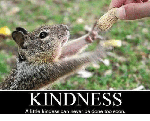 Memes, Soon..., and Kindness: KINDNESS  A little kindess can never be done too soon