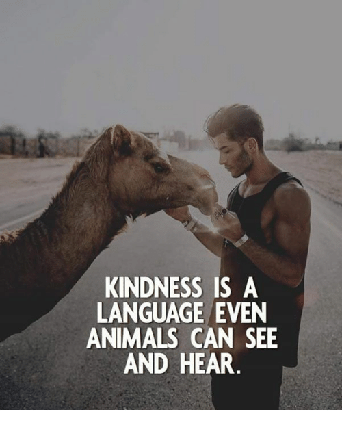 Kindness: KINDNESS IS A  LANGUAGE EVEN  ANIMALS CAN SEE  AND HEAR