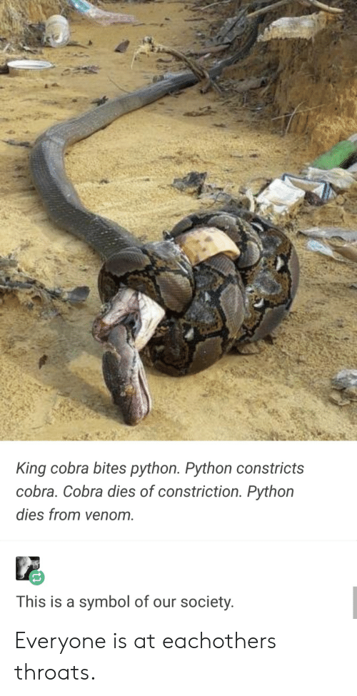 cobra: King cobra bites python. Python constricts  cobra. Cobra dies of constriction. Pythorn  dies from venom.  This is a symbol of our society Everyone is at eachothers throats.