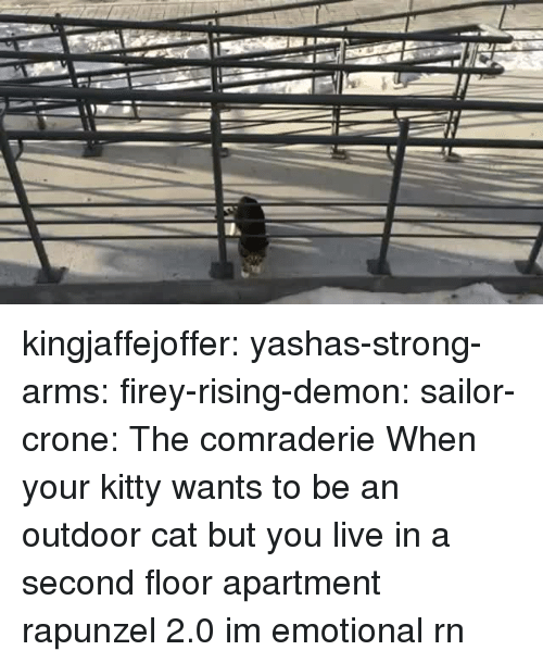 Rapunzel: kingjaffejoffer:  yashas-strong-arms:  firey-rising-demon:  sailor-crone: The comraderie   When your kitty wants to be an outdoor cat but you live in a second floor apartment   rapunzel 2.0  im emotional rn