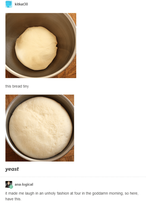 logical: kitkat30  this bread tiny  yeast  ana-logical  it made me laugh in an unholy fashion at four in the goddamn moning, so here,  have this