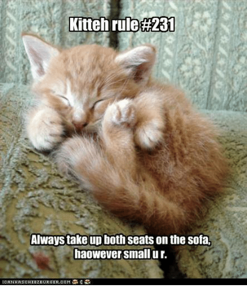 Memes, 🤖, and Sofa: Kitteh rule A31  Always take up both seats on the sofa.  haowever small ur.