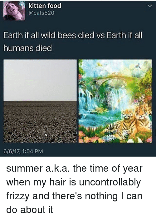 Food, Memes, and Summer: kitten food  @cats520  Earth if all wild bees died vs Earth if all  humans died  6/6/17, 1:54 PM summer a.k.a. the time of year when my hair is uncontrollably frizzy and there's nothing I can do about it