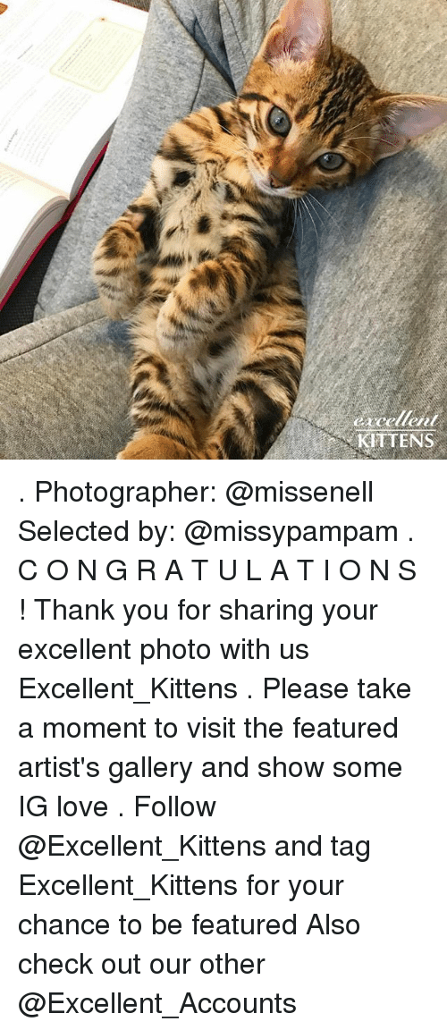 Love, Memes, and Thank You: KITTENS . Photographer: @missenell Selected by: @missypampam . C O N G R A T U L A T I O N S ! Thank you for sharing your excellent photo with us Excellent_Kittens . Please take a moment to visit the featured artist's gallery and show some IG love . Follow @Excellent_Kittens and tag Excellent_Kittens for your chance to be featured Also check out our other @Excellent_Accounts