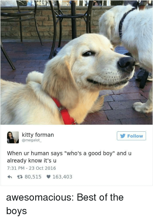 """Whos A Good Boy: kitty forman  @megalot  Follow  When ur human says """"who's a good boy"""" and u  already know it'su  7:31 PM 23 Oct 2016  h 80,515 163,403 awesomacious:  Best of the boys"""