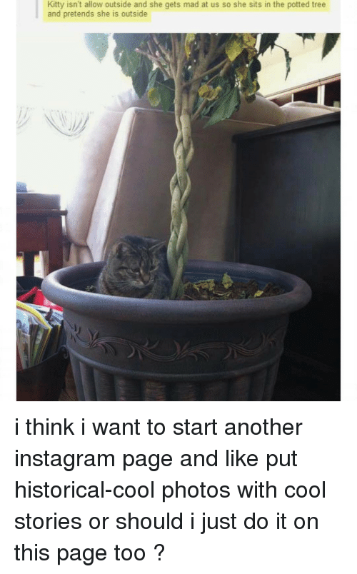 Instagram, Ironic, and Just Do It: Kitty isn't allow outside and she gets mad at us so she sits in the potted tree  and pretends she is outside i think i want to start another instagram page and like put historical-cool photos with cool stories or should i just do it on this page too ?