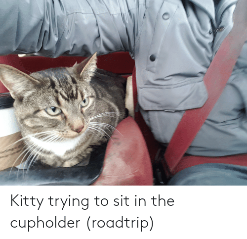 Sit In: Kitty trying to sit in the cupholder (roadtrip)