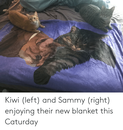 blanket: Kiwi (left) and Sammy (right) enjoying their new blanket this Caturday