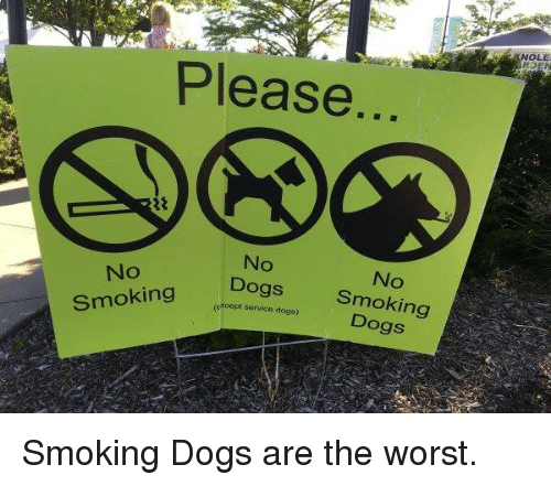Dogs, Memes, and Smoking: KNOLE  Please  No  Dogs  (except servica dogs)  No  No  Smoking  Dogs  No  Smoking Smoking Dogs are the worst.