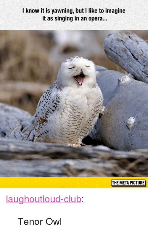 """tenor: know it is yawning, but I like to imagine  it as singing in an opera...  THE META PICTURE <p><a href=""""http://laughoutloud-club.tumblr.com/post/155030645128/tenor-owl"""" class=""""tumblr_blog"""">laughoutloud-club</a>:</p>  <blockquote><p>Tenor Owl</p></blockquote>"""