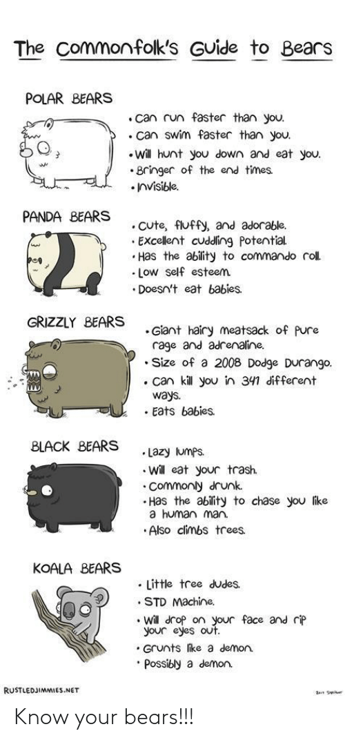 Bears: Know your bears!!!
