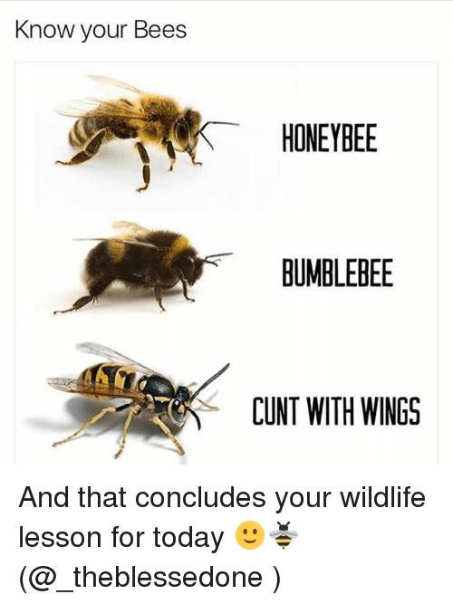 Memes, Cunt, and Today: Know your Bees  HONEYBEE  BUMBLEBEE  CUNT WITH WINGS And that concludes your wildlife lesson for today 🙂🐝 (@_theblessedone )