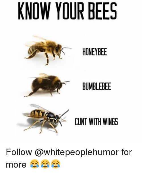Memes, Cunt, and Wings: KNOW YOUR BEES  HONEYBEE  BUMBLEBEE  CUNT WITH WINGS Follow @whitepeoplehumor for more 😂😂😂