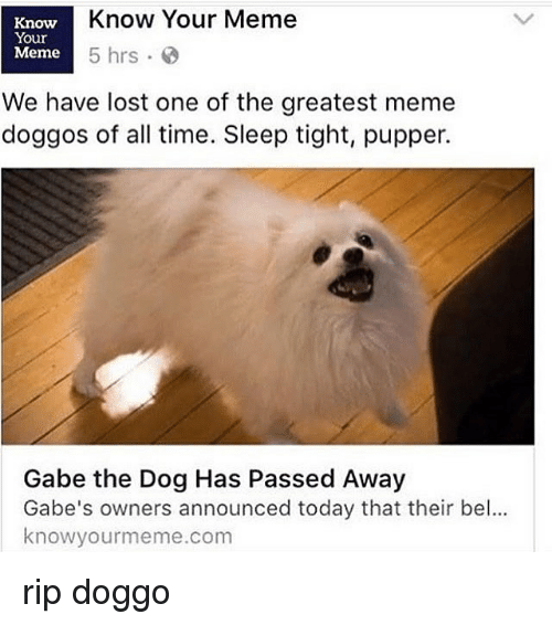 Memes, 🤖, and The Dog: Know Your Meme  Know  Your  Meme  5 hrs.  We have lost one of the greatest meme  doggos of all time. Sleep tight, pupper.  Gabe the Dog Has Passed Away  Gabe's owners announced today that their bel...  knowyourmeme.com rip doggo