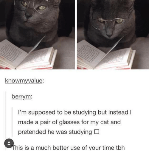 Dank, Tbh, and Glasses: knowmyvalue  berrym:  I'm supposed to be studying but instead I  made a pair of glasses for my cat and  pretended he was studying D  his is a much better use of your time tbh