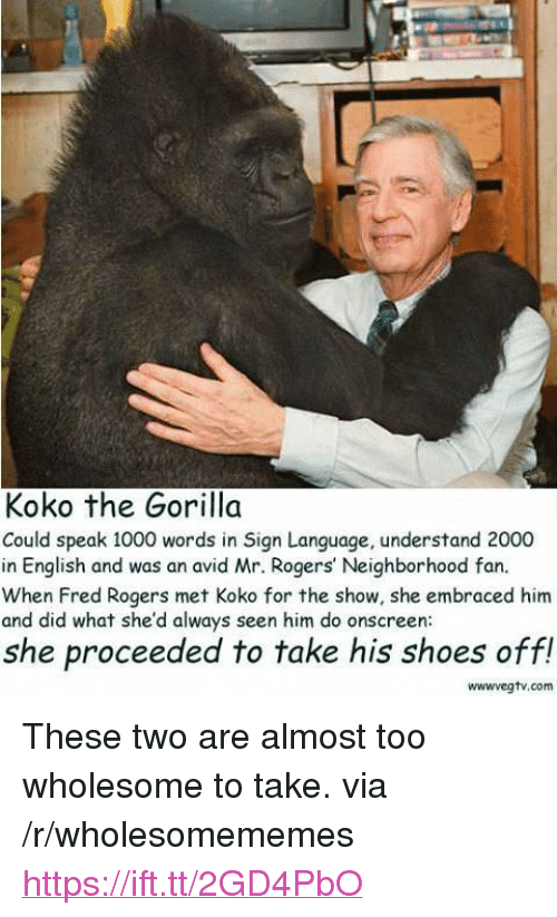 """fred rogers: Koko the Gorilla  Could speak 1000 words in Sign Language, understand 2000  in English and was an avid Mr. Rogers' Neighborhood fan.  When Fred Rogers met Koko for the show, she embraced him  and did what she'd always seen him do onscreen  she proceeded to take his shoes off!  wwwvegtv.com <p>These two are almost too wholesome to take. via /r/wholesomememes <a href=""""https://ift.tt/2GD4PbO"""">https://ift.tt/2GD4PbO</a></p>"""