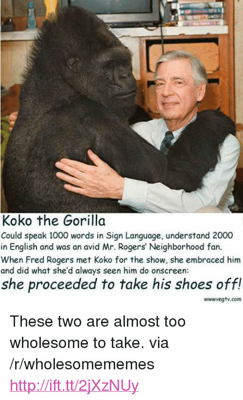 """fred rogers: Koko the Gorilla  Could speak 1000 words in Sign Language, understand 2000  in English and was an avid Mr. Rogers' Neighborhood fan.  When Fred Rogers met Koko for the show, she embraced him  and did what she'd always seen him do onscreen  she proceeded to take his shoes off!  wwwvegtv.com <p>These two are almost too wholesome to take. via /r/wholesomememes <a href=""""http://ift.tt/2jXzNUy"""">http://ift.tt/2jXzNUy</a></p>"""