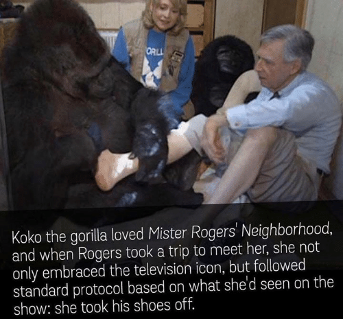 Lovedating: Koko the gorilla loved Mister Rogers' Neighborhood  and when Rogers took a trip to meet her, she not  only embraced the television icon, but followed  standard protocol based on what she d seen on the  show: she took his shoes off.
