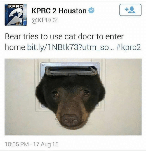 Bear, Home, and Houston: KPRC  KPRC 2 Houston  @KPRC2  Bear tries to use cat door to enter  home bit.ly/1 NBtk737utm.so.. #kprc2  10:05 PM 17 Aug 15
