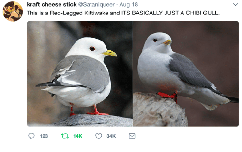 Chibies: kraft cheese stick @Sataniqueer Aug 18  This is a Red-Legged Kittiwake and ITS BASICALLY JUST A CHIBI GULL.  123 14K 34K a
