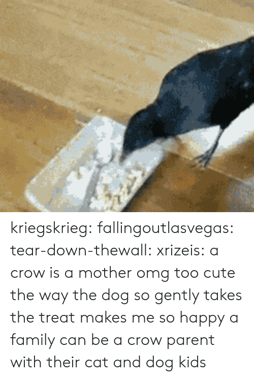 me-so-happy: kriegskrieg: fallingoutlasvegas:  tear-down-thewall:  xrizeis:  a crow is a mother  omg too cute  the way the dog so gently takes the treat makes me so happy  a family can be a crow parent with their cat and dog kids