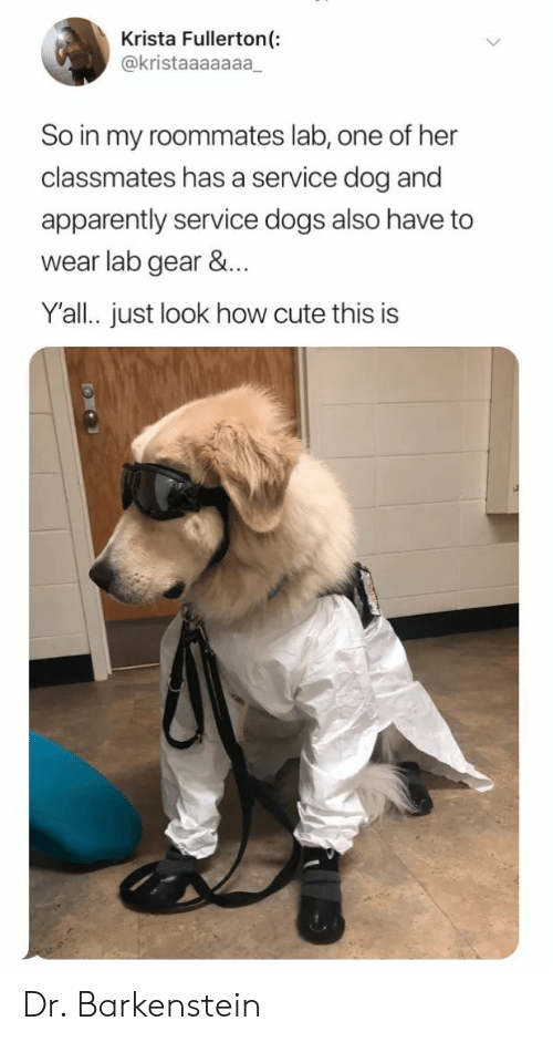 roommates: Krista Fullerton(:  @kristaaaaaaa  So in my roommates lab, one of her  classmates has a service dog and  apparently service dogs also have to  wear lab gear &...  Y'all. just look how cute this is Dr. Barkenstein