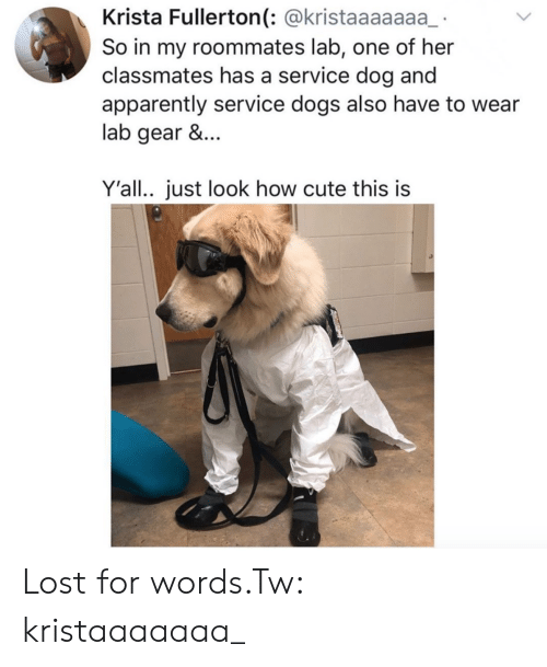 roommates: Krista Fullerton(: @kristaaaaaaa  So in my roommates lab, one of her  classmates has a service dog and  apparently service dogs also have to wear  lab gear &...  Y'all.. just look how cute this is Lost for words.Tw: kristaaaaaaa_