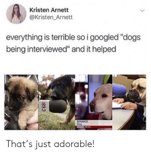 """Kristen: Kristen Arnett  @Kristen Arnett  everything is terrible so i googled """"dogs  being interviewed"""" and it helped  BOUNCE  Dog  0ON NEWS  89.3 That's just adorable!"""