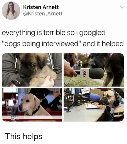 "Dogs, Girl Memes, and Helps: Kristen Arnett  @Kristen_Arnett  everything is terrible so i googled  ""dogs being interviewed"" and it helped  BOUNCE  Dog This helps"