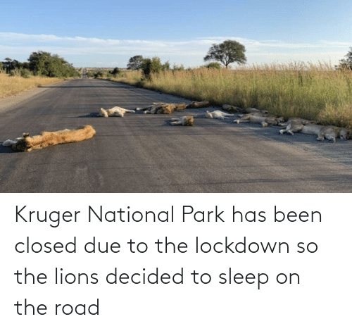 The Road: Kruger National Park has been closed due to the lockdown so the lions decided to sleep on the road