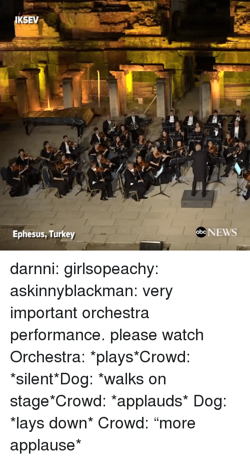 """Lay's, News, and Target: KSEV  Ephesus, Turkey  abe NEWS darnni: girlsopeachy:  askinnyblackman:  very important orchestra performance. please watch  Orchestra: *plays*Crowd: *silent*Dog: *walks on stage*Crowd: *applauds*   Dog: *lays down* Crowd: """"more applause*"""