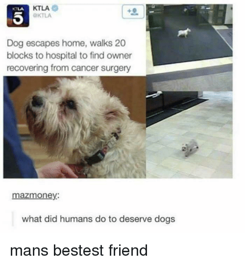 Ktla: KTLA  KTLA  KTLA  Dog escapes home, walks 20  blocks to hospital to find owner  recovering from cancer surgery  mazmoney:  what did humans do to deserve dogs mans bestest friend