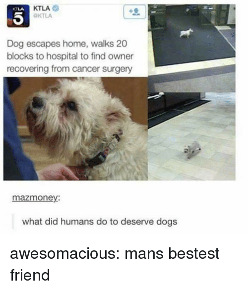 Ktla: KTLA  KTLA  KTLA  Dog escapes home, walks 20  blocks to hospital to find owner  recovering from cancer surgery  mazmoney:  what did humans do to deserve dogs awesomacious:  mans bestest friend
